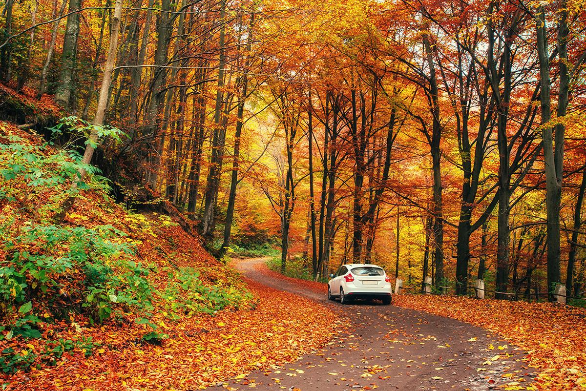 jesienny przegląd samochodu hp auto serwis stacja kontroli pojazdu szczecin santocka 44
